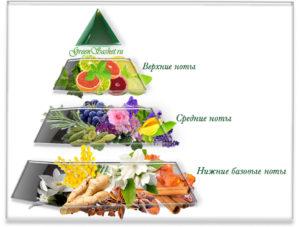 Духи своими руками. 5. Ольфакторная пирамида.