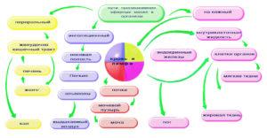 Схема путей проникновения эфирных масел в организм человека