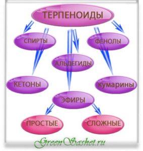 Терпеноиды в эфирном масле