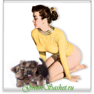 Лечение домашних животных эфирным маслом.